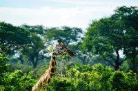 Wildlife Parks