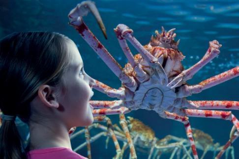 Click to view details and reviews for Gardaland Sea Life Aquarium 1 Day Pass.