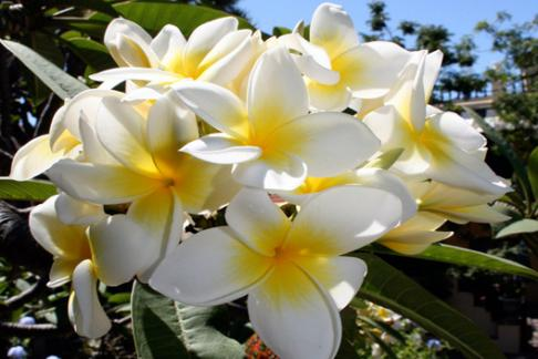 Click to view details and reviews for Sitio Litre Orchid Gardens.