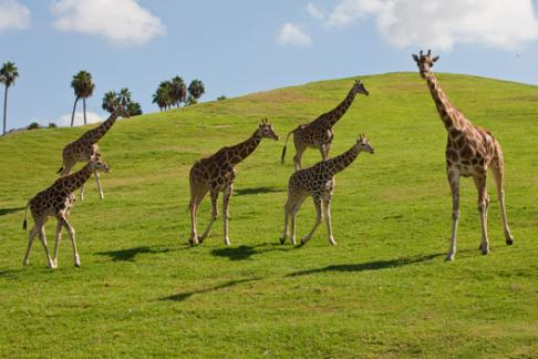 San Diego Zoo And Safari Park Tickets Prices Discounts Cheap