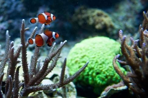 Click to view details and reviews for New England Aquarium.