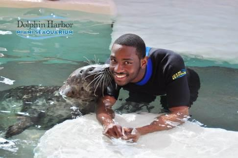 Click to view details and reviews for Miami Seaquarium Seal Swim.