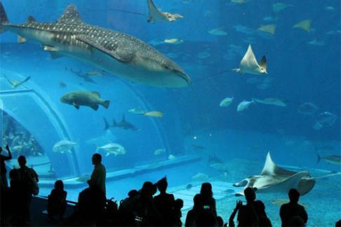 Acuario inbursa entradas ofertas descuentos y entradas for Precio entrada aquarium