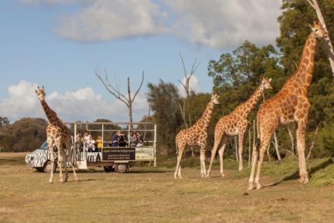 Click to view details and reviews for Werribee Open Range Zoo Melbourne Star.