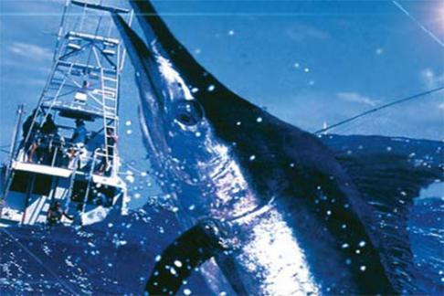 Deep Sea Fishing Cancun