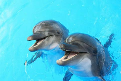 Click to view details and reviews for Dolphin Shallow Water Interaction 20 Mins.