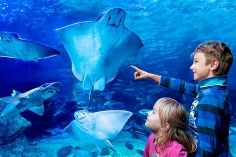 Click to view details and reviews for Aquadom Sea Life Berlin Uk Only.