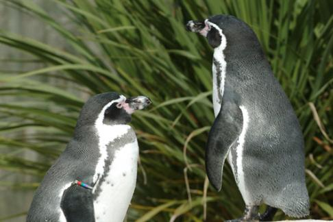 Click to view details and reviews for Weymouth Sea Life Adventure Park And Tower.