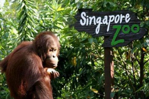 deals.com singapore zoo