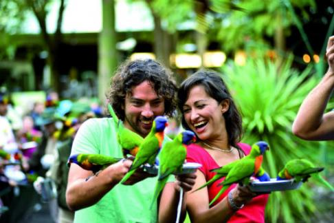 Currumbin Wildlife Sanctuary Experience Pass