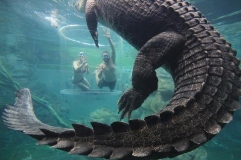 Click to view details and reviews for Crocosaurus Cove Standard Admission.