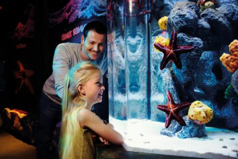 Click to view details and reviews for Add Sea Life Brighton Aquarium Priority Entry.