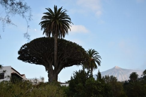 Loro Park + FREE Dragon Tree Park