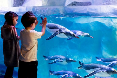 London Sea Life Aquarium Tickets Prices Discounts Cheap Deals