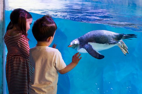 Click to view details and reviews for Birmingham National Sea Life Centre.