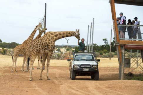 Click to view details and reviews for Monarto Zoo Admission Only.