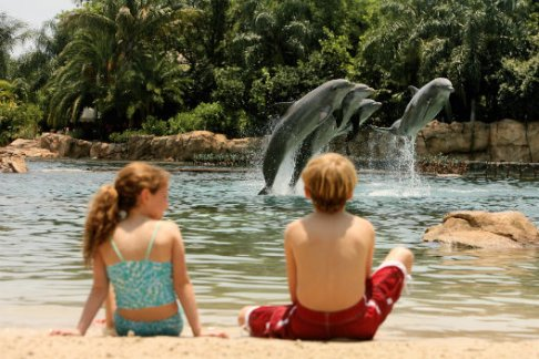 Click to view details and reviews for Discovery Cove Package Seaventure.