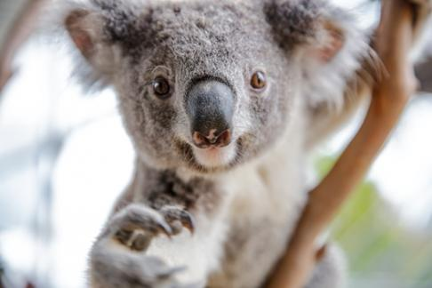 Click to view details and reviews for Wild Life Sydney Zoo Entry Only.