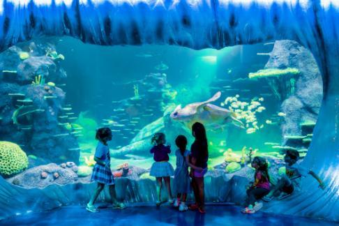 Aquarien Fische & Aquarien Aquarium