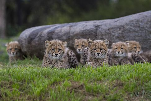 San Diego Zoo & Safari Offers, Discounts & Cheap Tickets