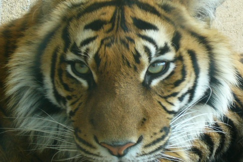 Click to view details and reviews for Terra Natura Zoo Benidorm Standard Ticket.