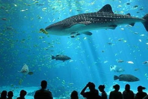 Click to view details and reviews for Montparnasse Tower Aquarium De Paris.