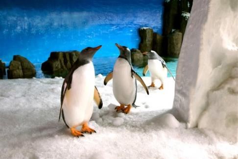 Sea Life Melbourne Aquarium Entry Hoodie Penguin Toy